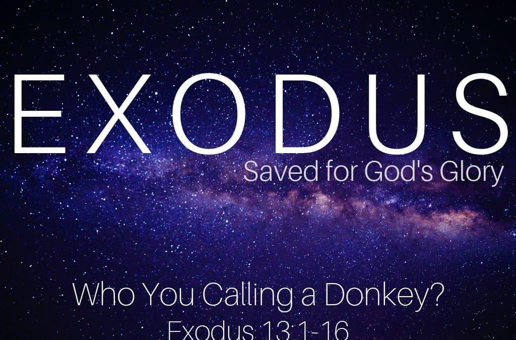 Exodus: Who You Calling A Donkey?