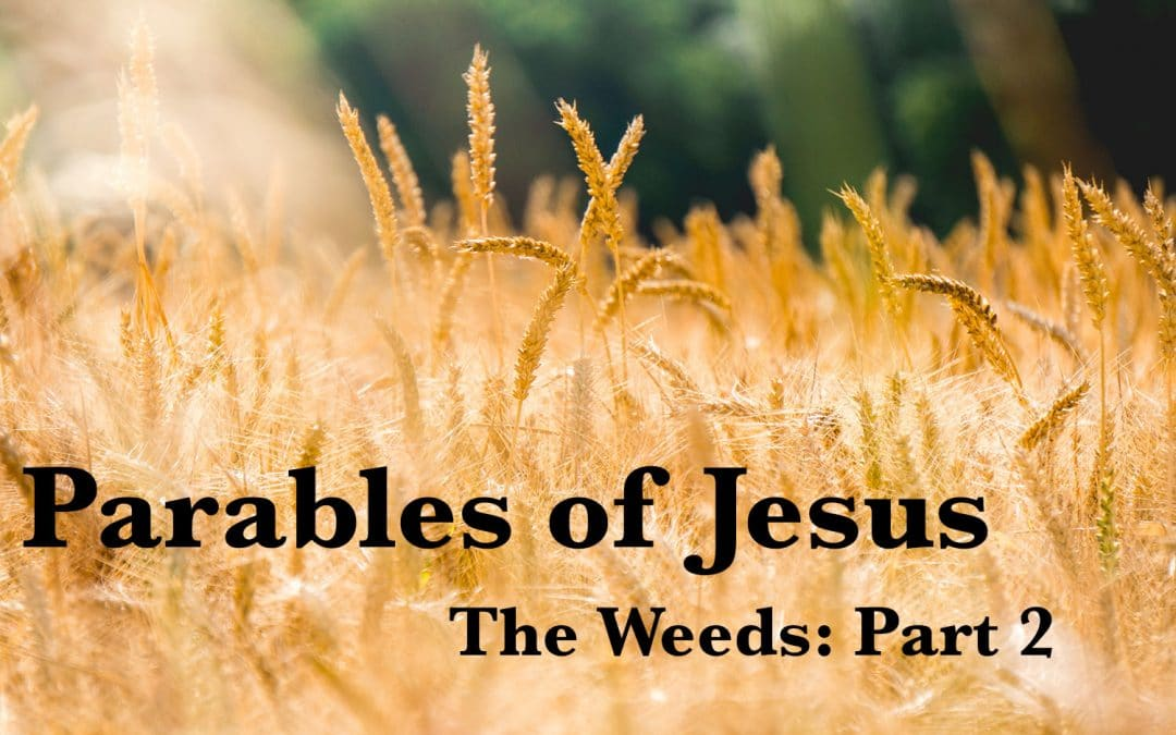 The Parable of the Weeds (Part 2)